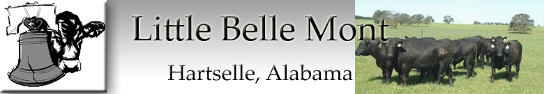 Little Belle Mont Blog